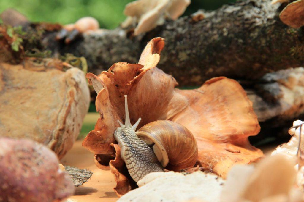 Gljivarijada