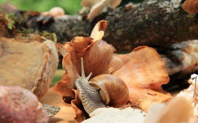 Gljivarijada – Kamačnik